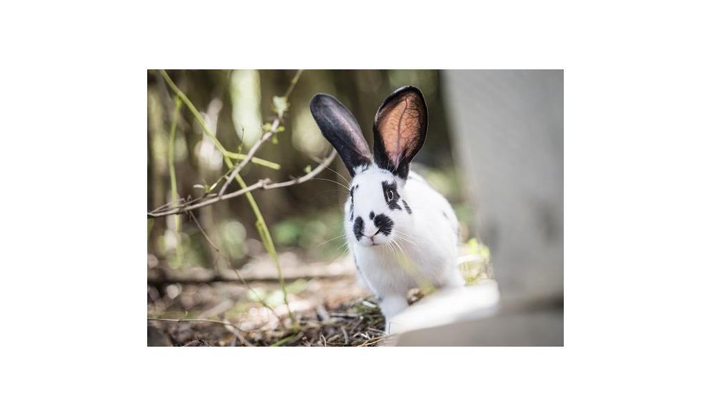 Badge Bunny sito di incontri